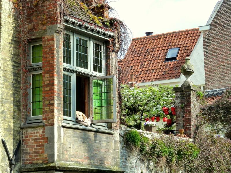 house and dog